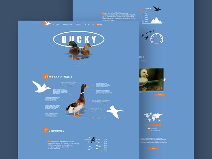 Ducky - A social web page on the topic of protection of wild animals. In this freebie, the topic is wild ducks.