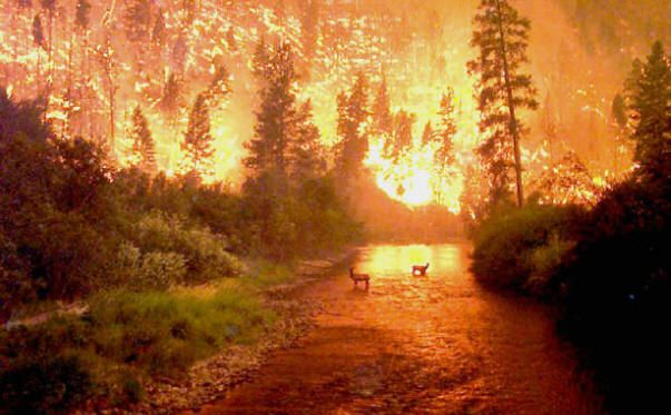 The 1988 Yellowstone Fire: More than 793000 acres (36% of the park) were affected by fire. More than 8,500 acres were completely burned.