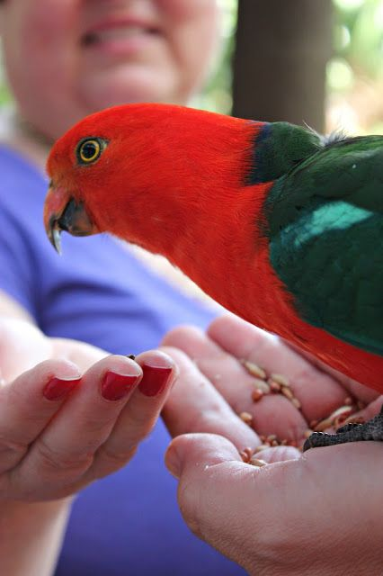 a bird in hand is worth two in the bush essay contest