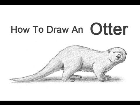 how to draw an otter face step by step