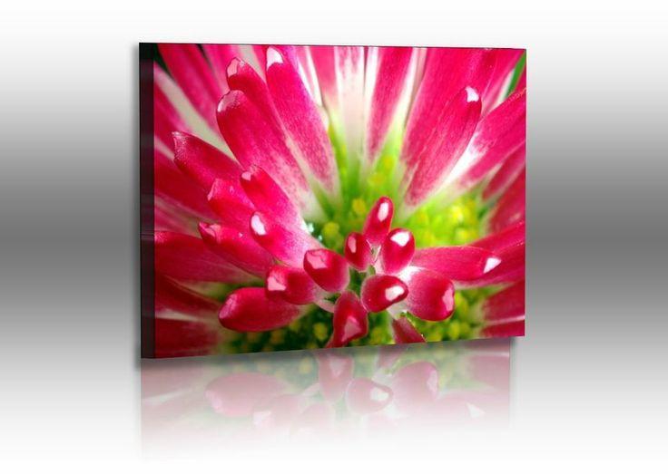 Premium Acrylglasbild Blumen Bild Pink Rot Blüte Fine-Art, Acrylglas Foto