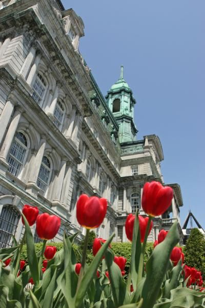 Affordable Honeymoon Destinations: Montreal, Canada