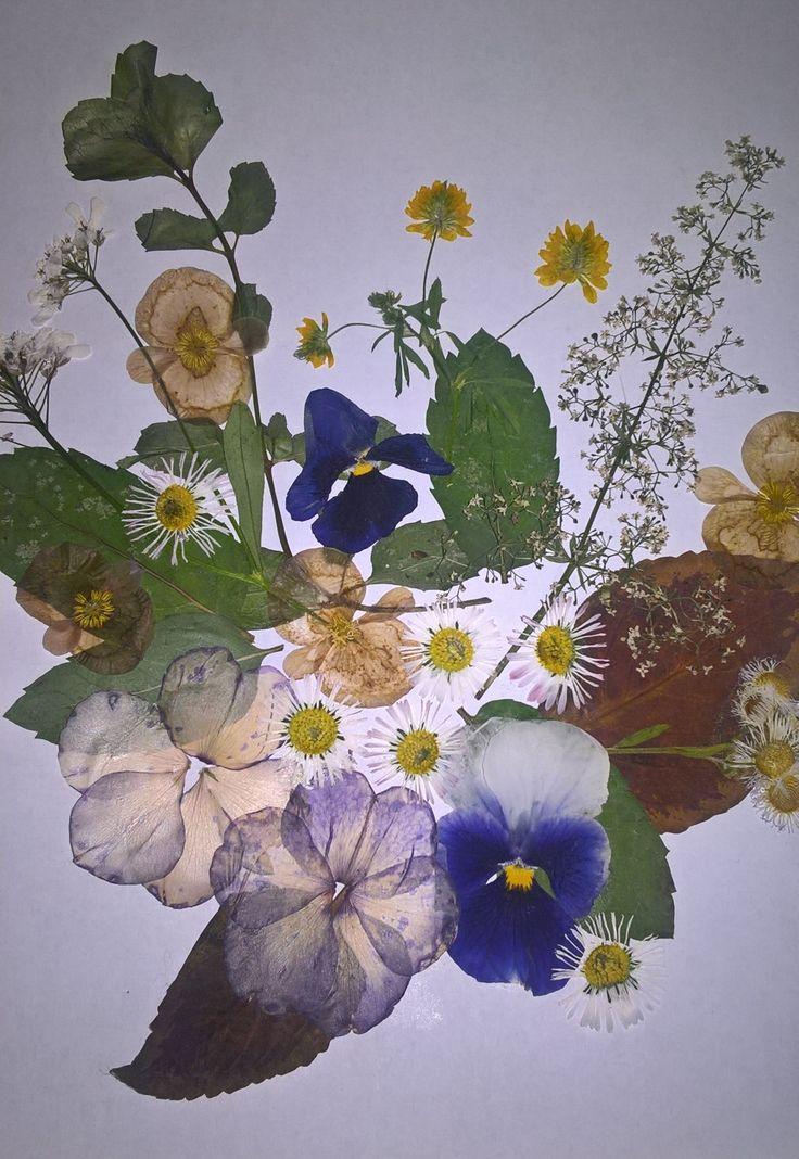 DIY flower pressing 😎💐