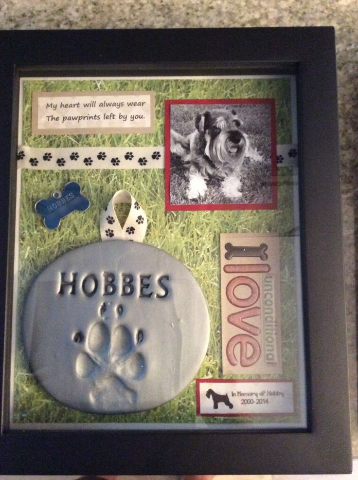 Shadow box in memory of my sweet Hobby Dog. Such a good boy.