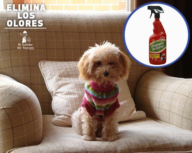Si quieres quitar el olor de tu mascota de tus muebles, contamos con el Eliminador de Olores que dejará tus muebles oliendo como nuevos.