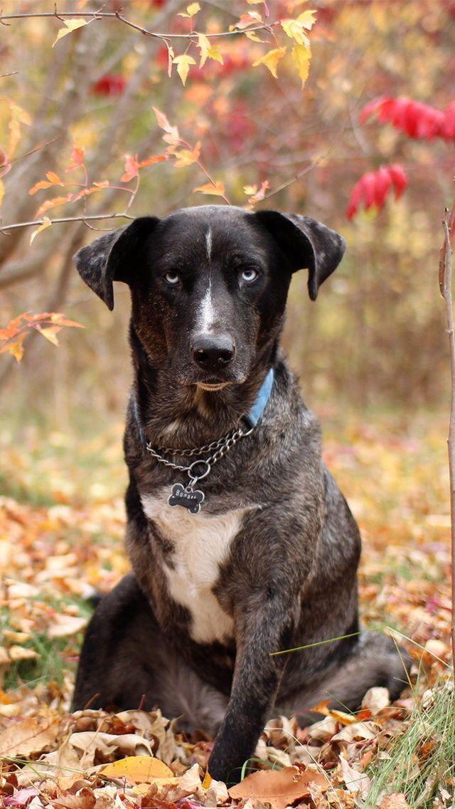 17 best Dogs backgrounds images on Pinterest | Backdrops ...