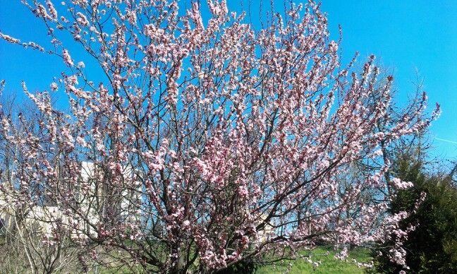 Wiosna w Rzeszowie