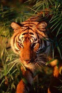 How to Build a Tiger Habitat Diorama thumbnail