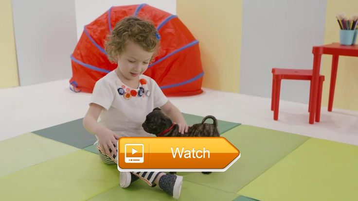 Cute Animals Puppy Preschool Meet Reggie Nick Jr  Cute Animals Puppy Preschool Meet Reggie Nick Jr In Nick Jr Puppies your preschooler will meet the adorable puppy Reggie Reggie is a cute and cuddly  on Pet Lovers