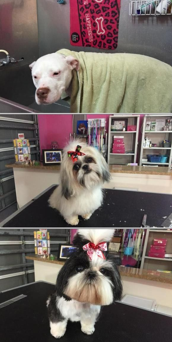 Glamour Paws Salon offers some of the best professional dog grooming services in your area. This team of local dog groomers is available for your pet washing service needs.