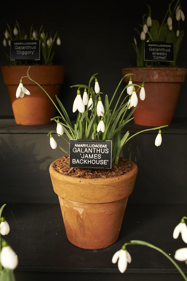 Chelsea Physic Garden Snowdrop Days from http://LondonTown.com