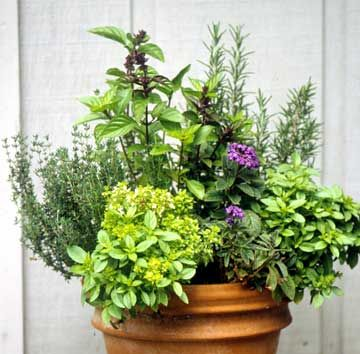 Container herbs for Balcony herb garden designs containers