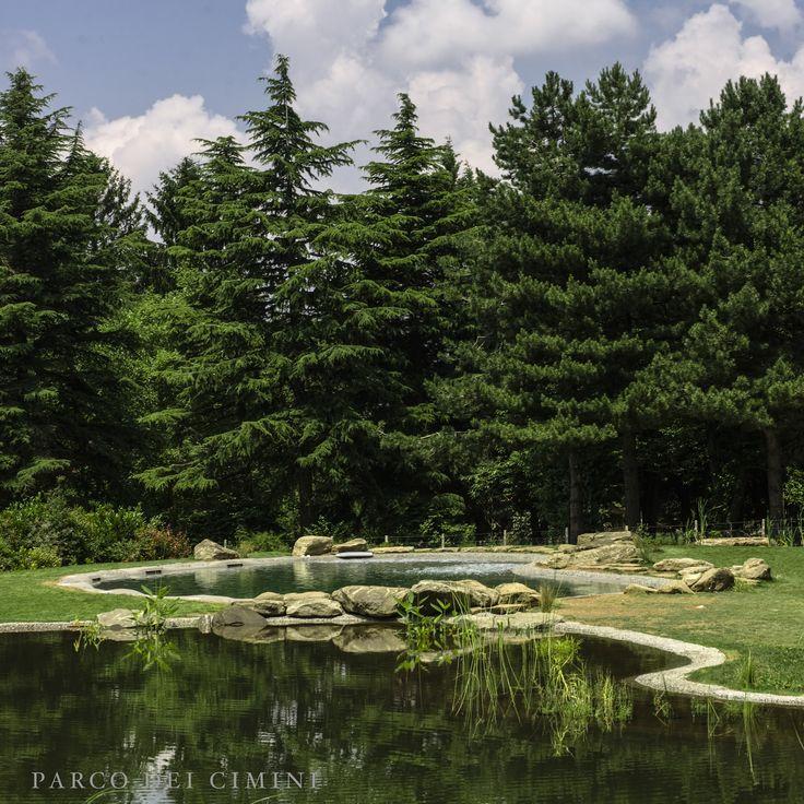 Riflesso pineta su Bio lago e Bio piscina