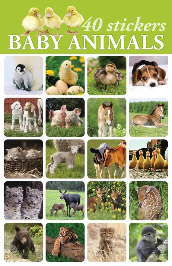 Products Archive Benny Love Benny Life Animal Stickers Baby Animals Kids Adorable