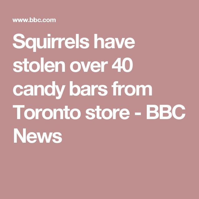 Squirrels have stolen over 40 candy bars from Toronto store - BBC News