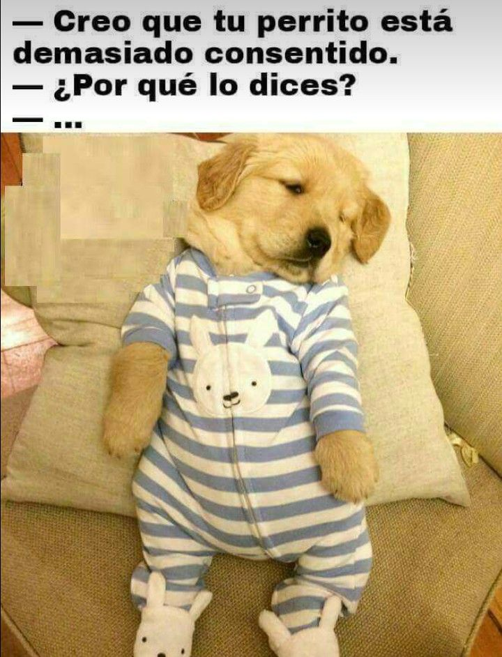 Pin By Alexa On Memes Frases Friends Puppies In Pajamas Cute Baby Animals Cute Animals