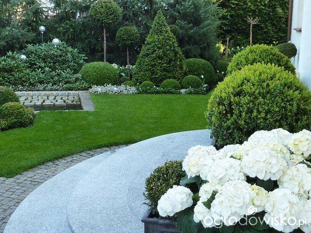 Ogród nie tylko bukszpanowy - część I - strona 3 - Forum ogrodnicze - Ogrodowisko
