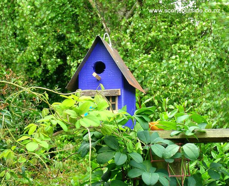 Birdhouse with feeding platform in my garden, perched on a tall post with a climber.