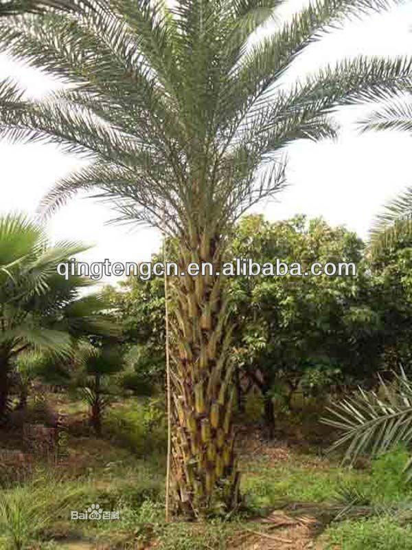 Artificial Palm,Artificial Palm Tree $980~$5800