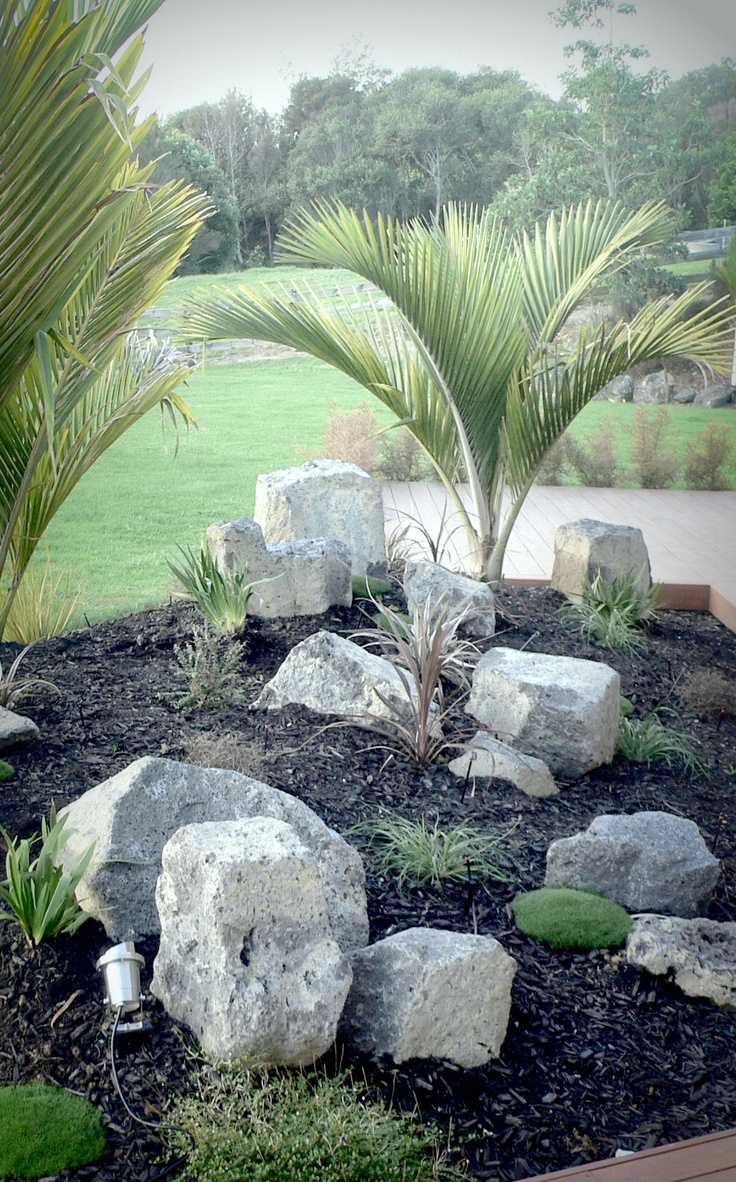 Chatham Is Nikau underplanted with mainly NZ natives. Designed and implemented by Fusion Landscape Design.