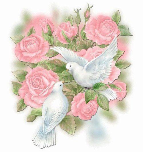 Rose doves
