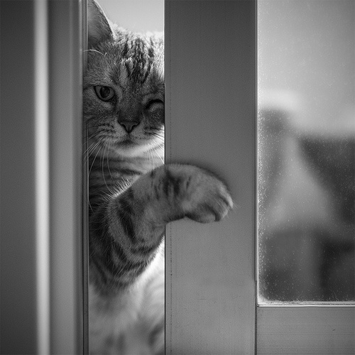 : Cat Photography, Cats Monochrome, Cuddly Cats, Adorable Animals, Cats What, Cats Black, Cats Dogs