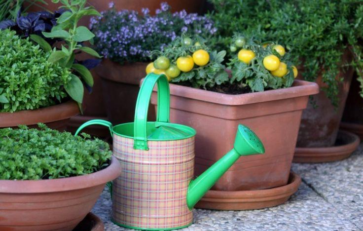 A különböző edényekben, dézsákban, tartókban nevelt növényekkel kertté varázsolhatjuk az erkélyt, teraszt vagy más olyan területet, amely egyébként nem lenne értékes számunkra....