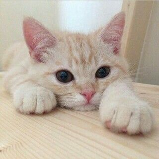 Hewan apa yang kalian suka yang yang bisa bikin kalian ketawa apapun yang kalian rasakan? Aku suka kucing