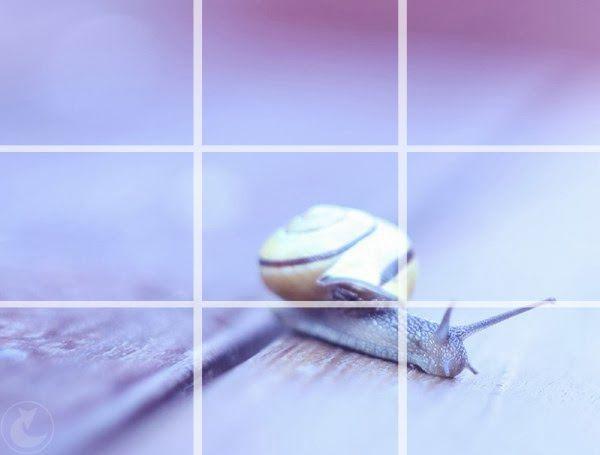 Kompozycja obrazu co to jest | kompozycja w fotografii - podstawy fotografii dla początkujących | poradnik jak kadrować i ustawiać przedmioty