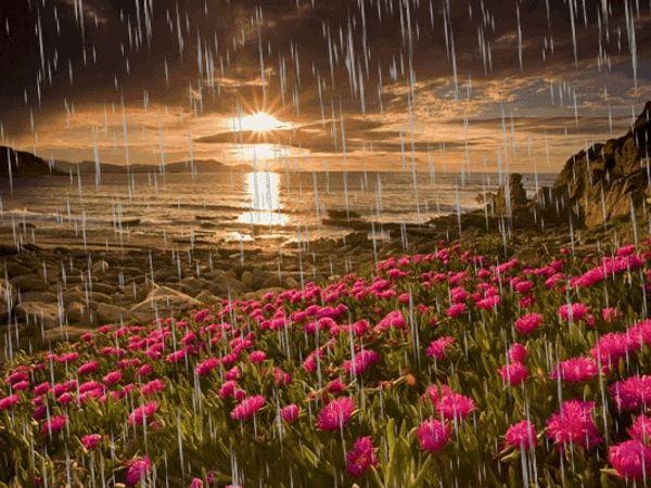 Una puesta de Sol en el Mar, y la Lluvia que cae sobre las Flores, en como llorar en un: Adiós. A veces lloramos de alegría y otras lloramos de .....!!!! ...