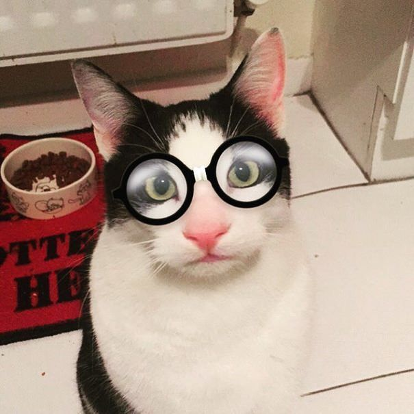 filtros-snapchat-mascotas-animales-18