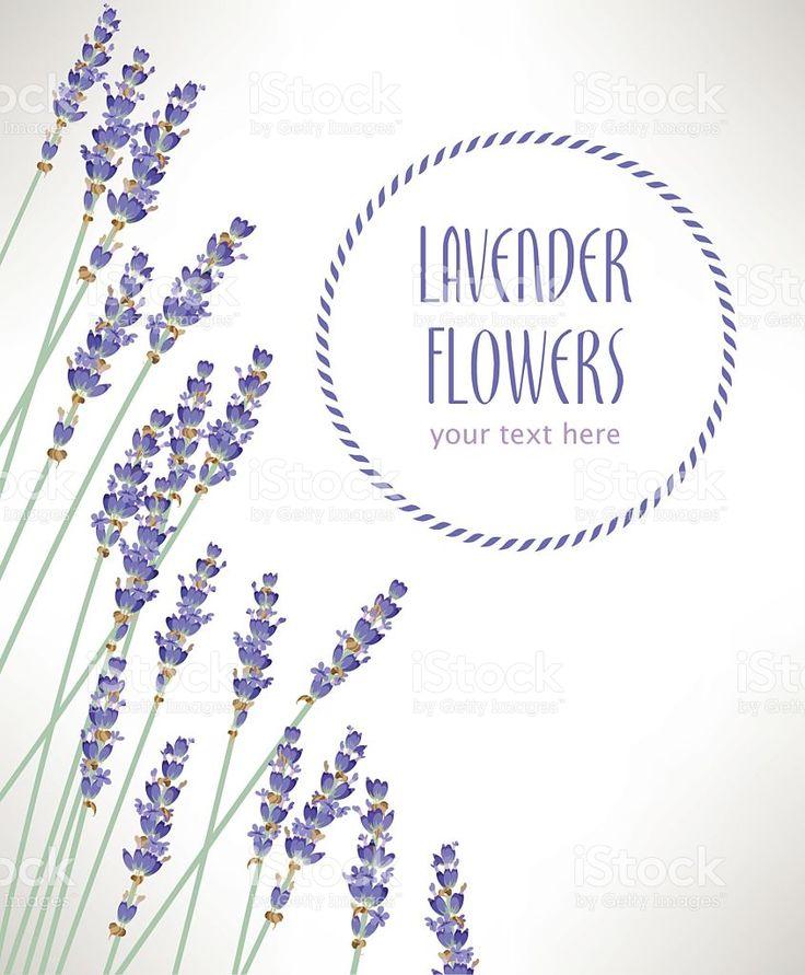 Lavender flowers royalty-free stock vector art