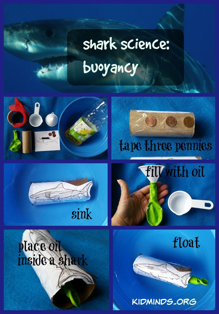 Shark Science: Buoyancy // This experiment is very simple, but my shark-crazy kids love it and want to do it all day. Attach a photo of a shark to a toilet paper roll. Tape three pennies to the roll and throw it in the water. Does it sink or float? It sinks! Now fill a balloon with 1/3 cup oil and stick it inside the toilet roll. Now that it is even heavier does it sink or float? It floats!