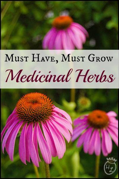 Must Have, Must Grow Medicinal Herbs l How and What to Grow l Homestead Lady (.com)