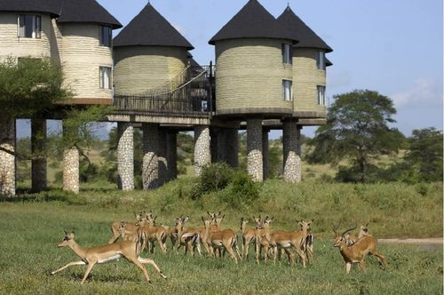 Tsavo East and Tsavo West  National Park Kenya safari tour from Mombasa Kenya coast and beach hotels.    T he Kenya Coast safari tour provides the opportunity to explore the red soiled plains of the Tsavo east and the scenic hilly terrain of the Tsavo West.  http://www.naturaltoursandsafaris.com/mombasa_kenya_safaris.php
