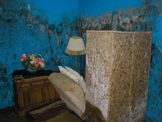 AAA Emergency Services specializes in Mold Removal and remediation. http://www.aaaemergencyservices.com
