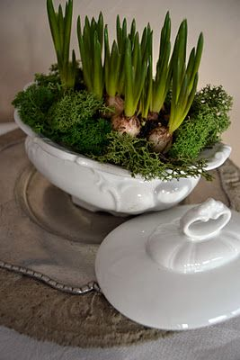 tureen with moss and bulbs love to do this in winter so I have flowers for Thanksgiving or Christmas