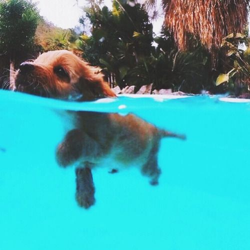 Doggy paddle to victory