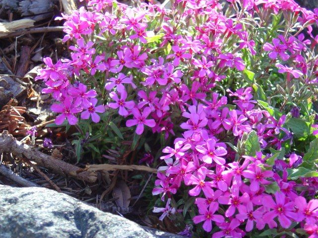 Garden Flowers Wallpaper best 10+ hd flower wallpaper ideas on pinterest | hd flowers