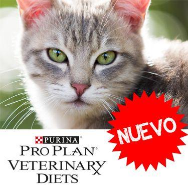Nueva línea de alimentos medicados para gatos  de la marca Pro Plan Veterinary Diets. ¡De venta en Best for Pets!