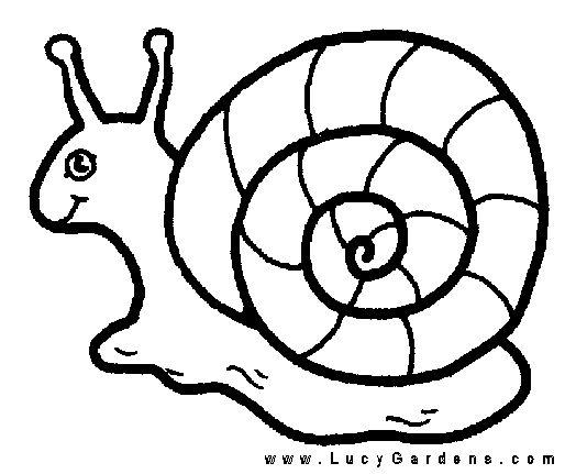 Coloring Book Flowers Outline Snail Coloring Page Snail