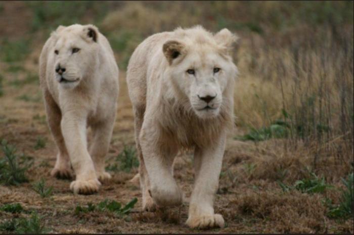 Cheetah Farm, Bloemfontein. Plenty of wildlife for guests to photograph!