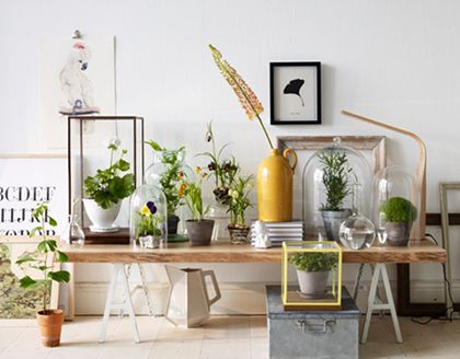 Bell jars and greenery