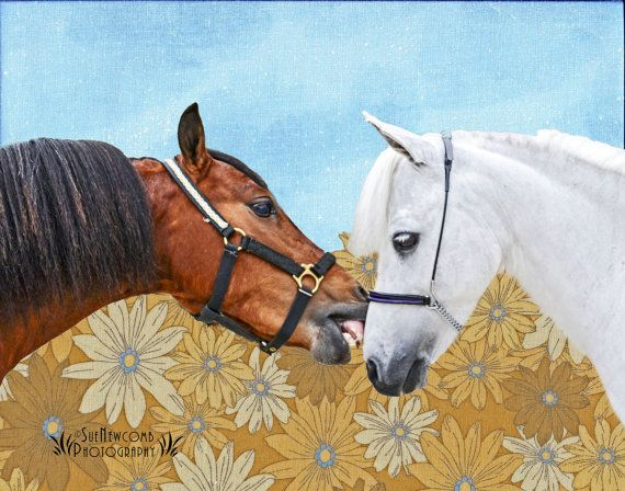 The Ponies by SueNewcombPhotos on Etsy. Using my original photograph of these two ponies caught in a moment, I also scanned in pieces of material for the background, and designed this collage in Photoshop.