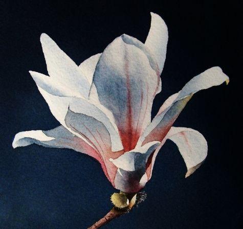 Magnolia Blue Period, painting by artist Jacqueline Gnott: Colour Paintings, Watercolor Flowers, 5X5 Wc, Painting Watercolor, Magnolia Blue, Gnott Watercolor, Jacqueline Gnott
