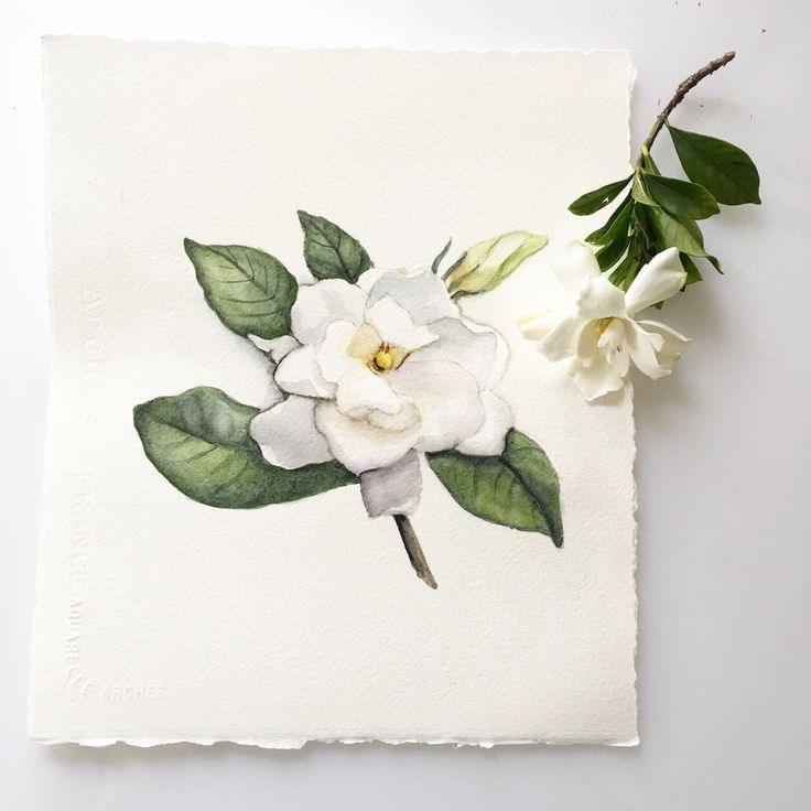 Don't you love the sweet fragrance of a fresh gardenia? Here is the most recent watercolor Giclée print to grace our shop this week.