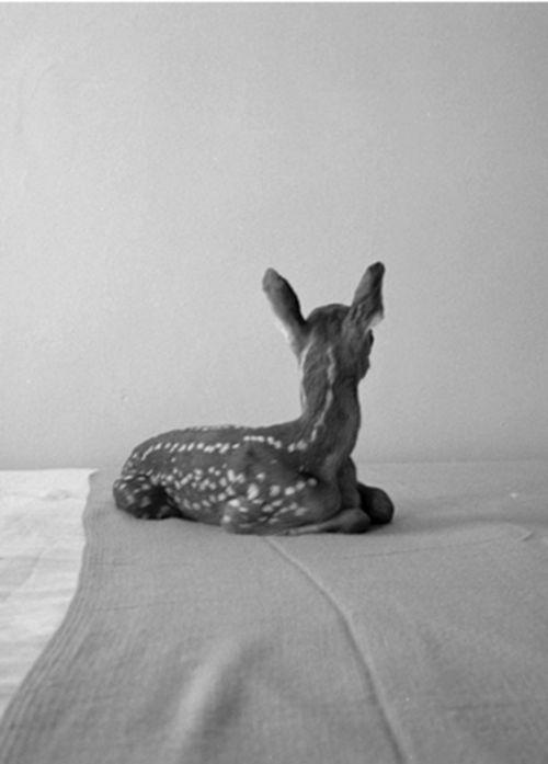 Bambi #HfS #animals