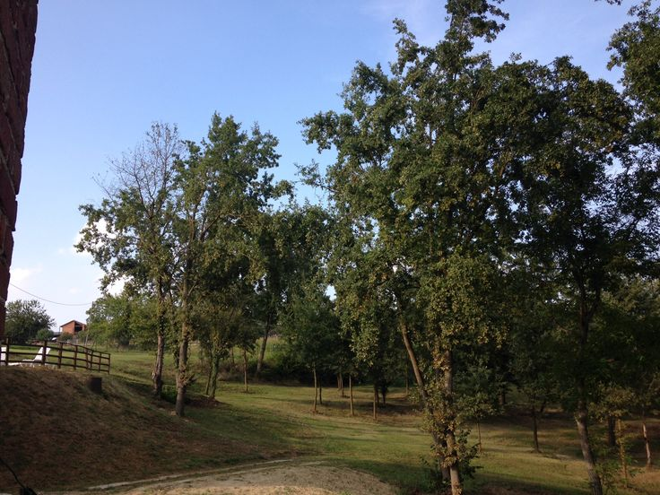 Il parco de La Castella. Un giardino nel Monferrato. Roveri secolari, olmi, ciliegi, pini.   La Castella. Reg. Sant'Antonio 13 Villafranca d'Asti ITALY