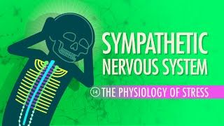 crash course nervous system pdf