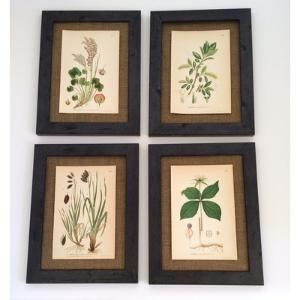 Vintage Botanical 4 Piece Framed Painting Print Set $369.99 by cathleen